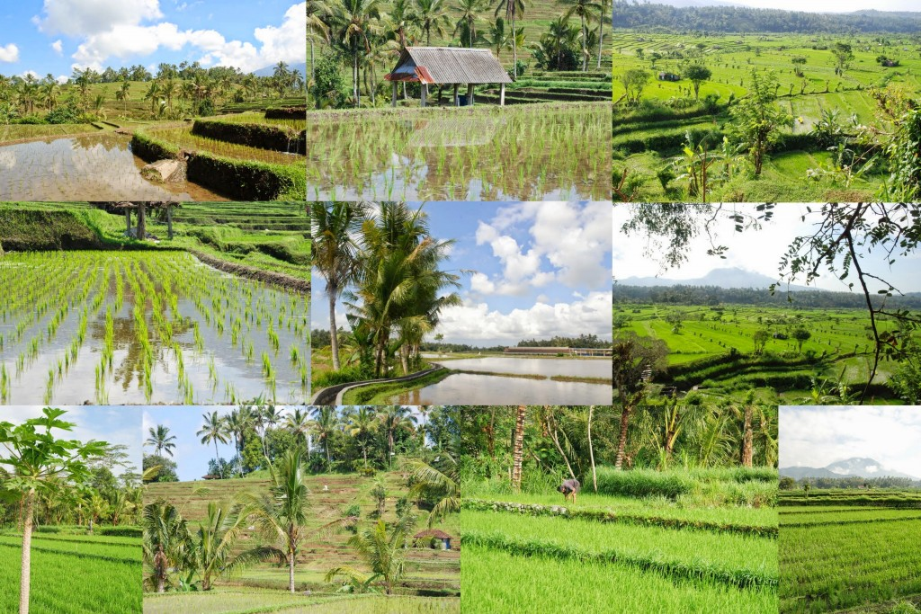 Bali été 2014-004